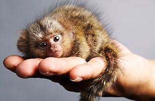Top 10 Smallest Living Animals