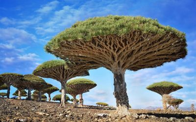 Wonderful Trees in The World
