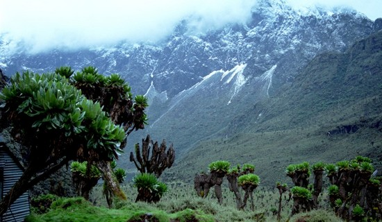 The Rwenzori Mountains Best Hiking Trails