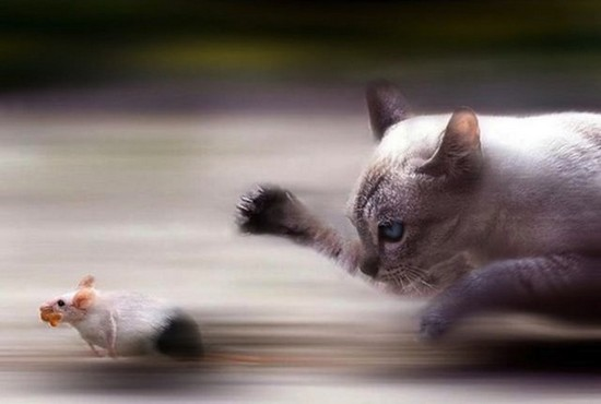 Cat and Mouse War