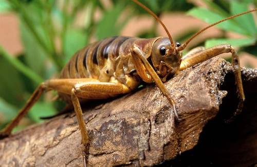 10 Most Terrifying insects