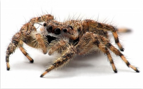 0 Most Terrifying insects