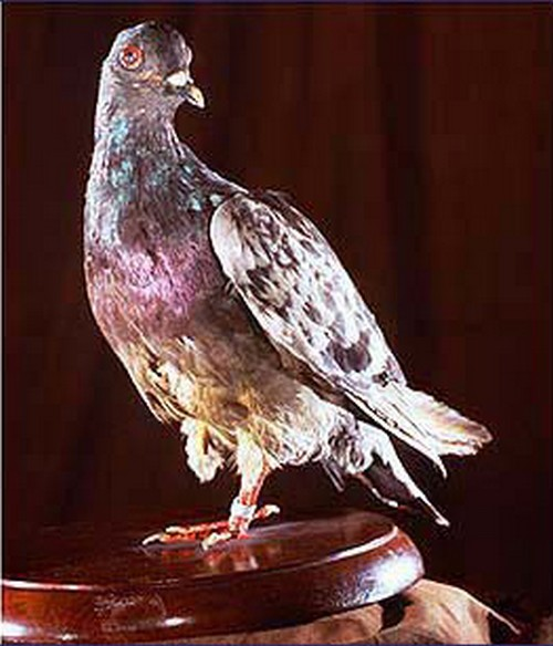 10 Most Famous Historical Birds