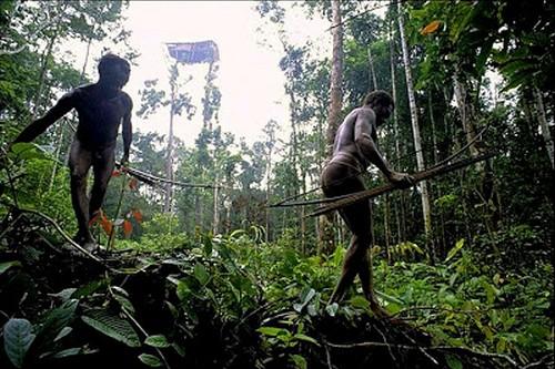The Korowai Tribe