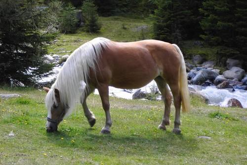 10 Prettiest Horses