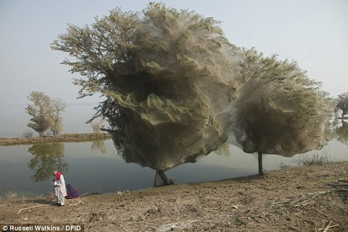 Ghost Trees in Pakistan