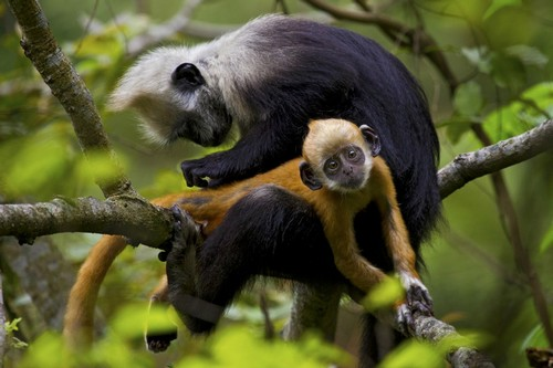 most amazing monkeys