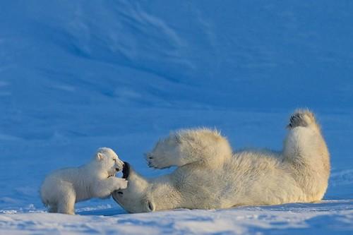 10 Adorable Animal Moms And Babies