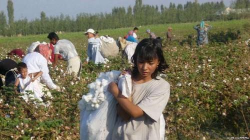 Modern Slavery in Uzbekistan