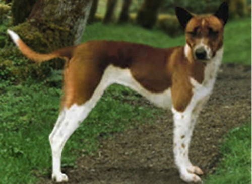 Unique Dog Breeds