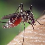 10 Deadliest Diseases Caused by Mosquitoes
