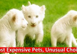 Most Expensive Pets, Unusual Choices