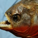 10 of the Most Dangerous Fish of the World