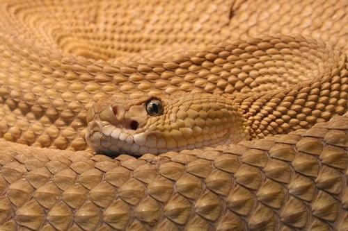 Dangerous Snake Species