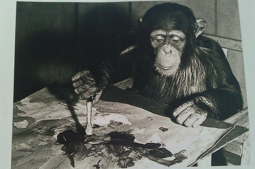 Congo, the Chimpanzee