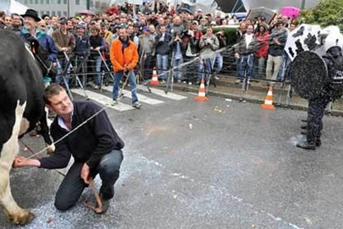 Spraying Milk Protest in Belgium