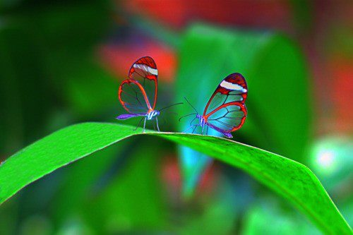 Transparent Animals Butterfly