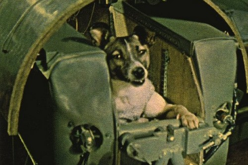 Laika, Historically Famous Animals