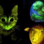10 Spectacular Glowing Animals