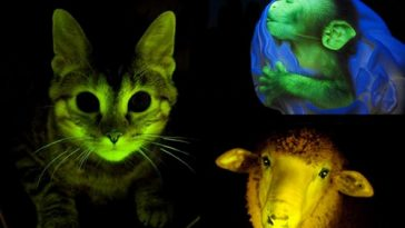 Man-made Glowing Creatures