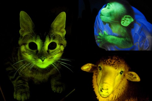 10 Spectacular Glowing Animals - Wonderslist