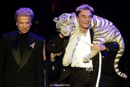 Montecore, the White Tiger