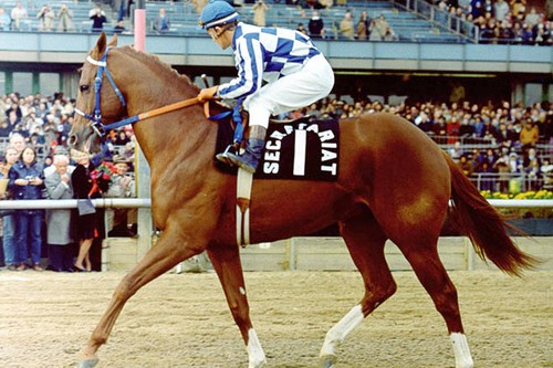 Secretariat during his retirement