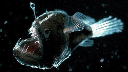 10 Underwater Creatures with Bizarre Appearance