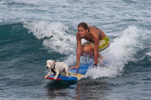 Bizarre Sports Dog Surfing