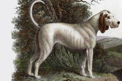 TalbotHound Extinct Breeds of Dogs