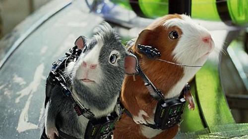 Animal Astronauts Guinea pigs