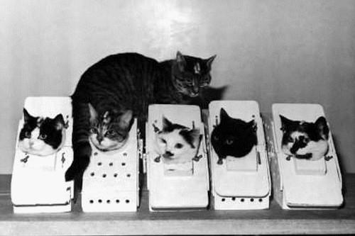 NASA Cats