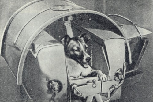 The world's most famous dog, Laika