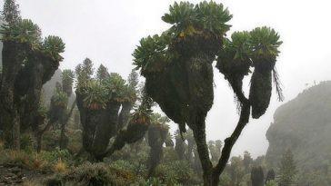 10 Most Endangered Forests
