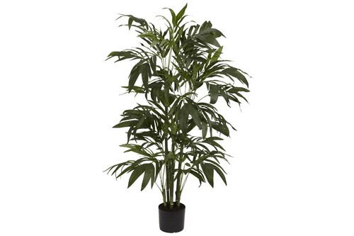 Bamboo Palm Silk Tree