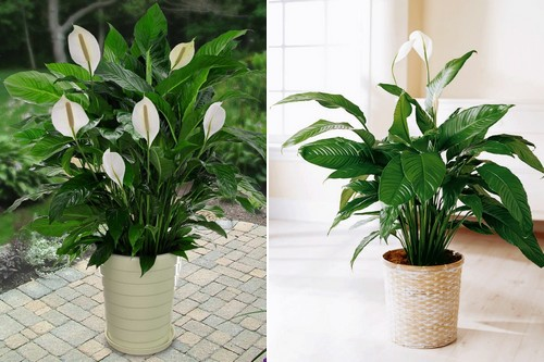 10 popular indoor houseplants that purify air - Names of indoor plants ...