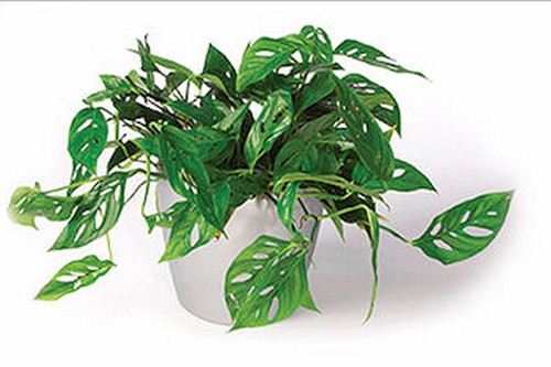 10 Popular Indoor Houseplants That Purify Air