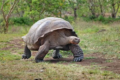 top 10 slowest animals in the world   wonderslist