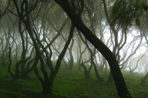 Top 10 Exotic Cloud Forest Around The Globe