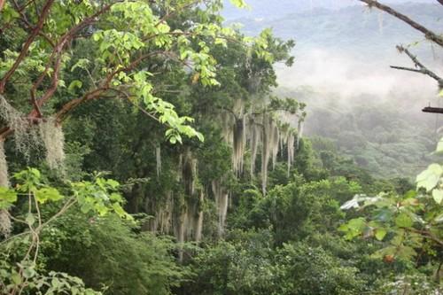 El Cielo Biosphere, Mexico