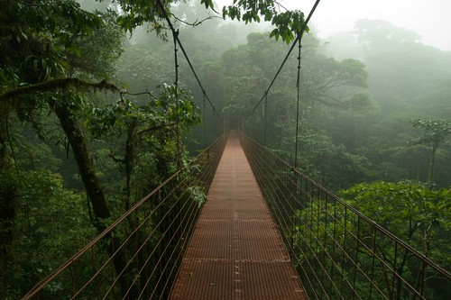 10 Exotic Cloud Forest