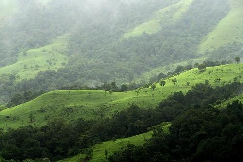 Shola Forest, India