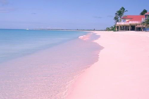 Pink Beaches Of Barbuda Caribbean Sea