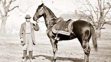 Famous War Horses