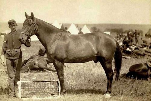 Comanchee Famous War Horses