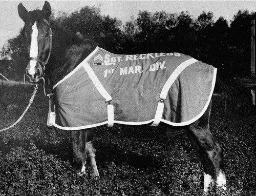 Sergeant Reckless Famous War Horses