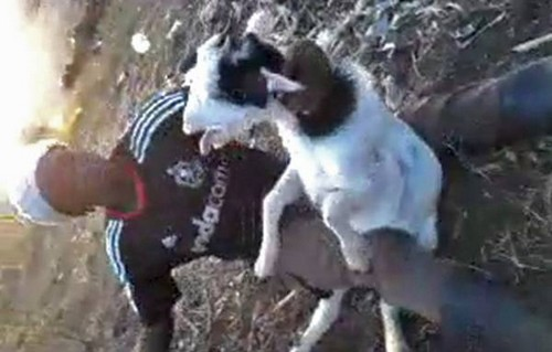 Goat beater to be charged with animal cruelty