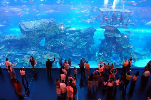 Most Amazing Aquariums