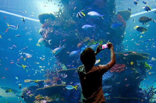 SEA Aquarium, Singapore