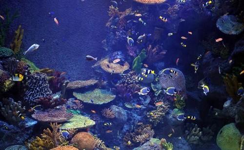 Turkuazoo Aquarium, Istanbul